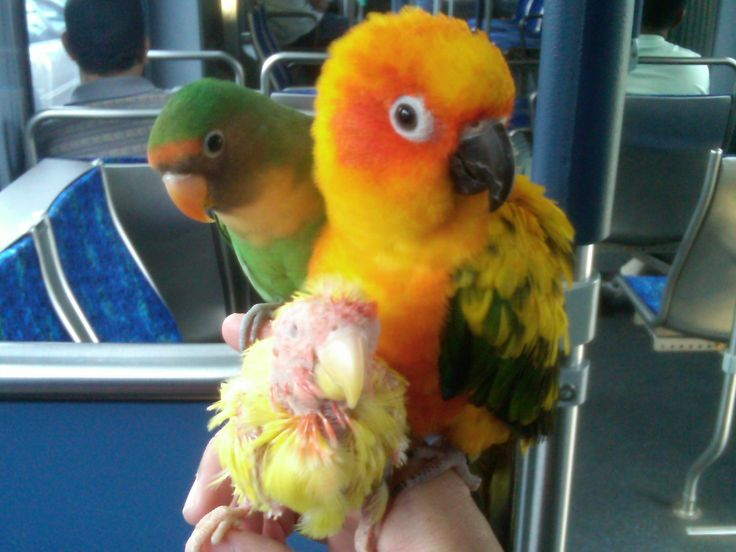 guide to a well behaved parrot