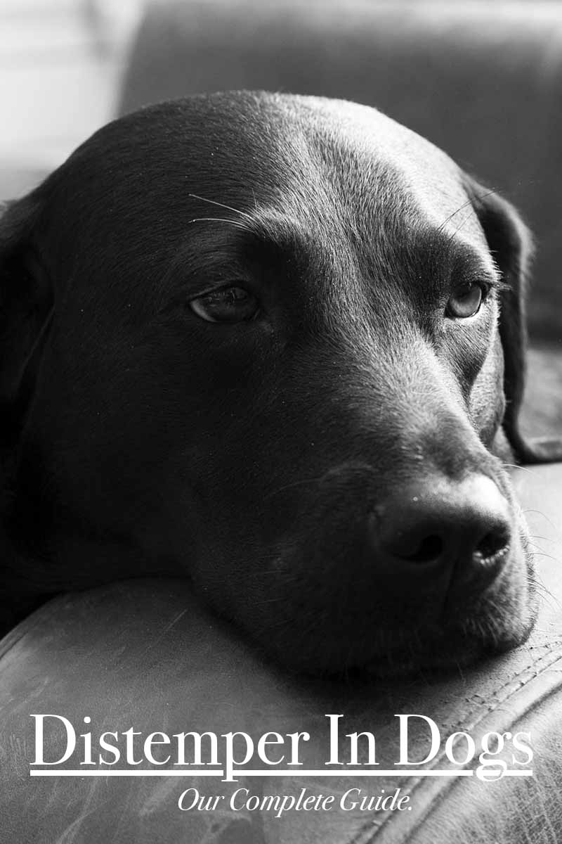 what are guide dogs used for